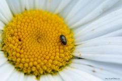 Blomma med insekt