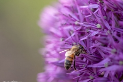 Blomma och insekt