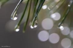 Evalill_1694_regndroppar