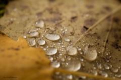 Evalill_1746_regndroppar